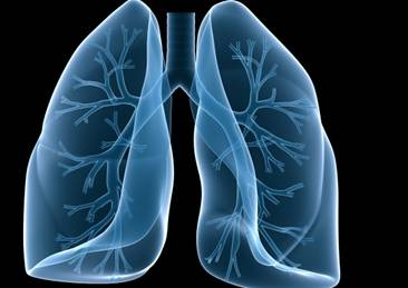3D technique brings hope for lung regeneration