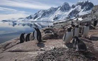 Climate change threatening penguins in Antarctica