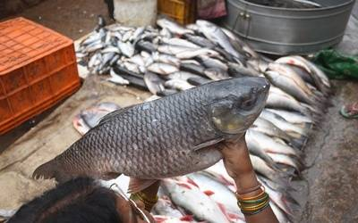 Fishy tales: Goa's political pot boils over formalin