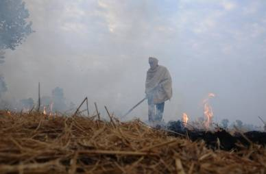 Viable alternative emerges to burning paddy straw in Punjab (Environmental Feature)